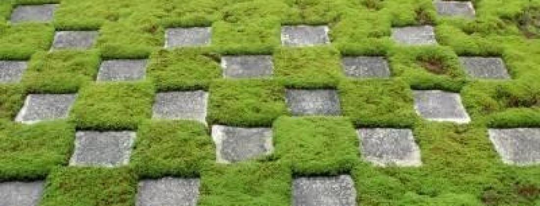 Как вырастить мох на даче?!