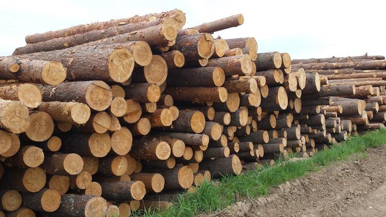положен ли лес на строительство бесплатно