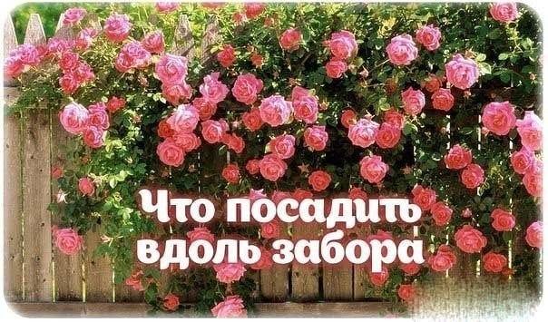 posadka_zabor